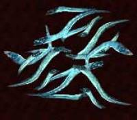 Lamprea (Lamprey) Lamprea-lamprey